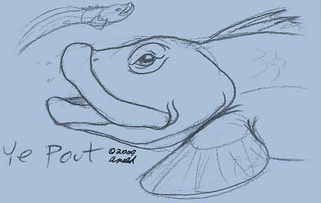 pout pout fish coloring pages - 6 new england aquarium ocean pout pencil on