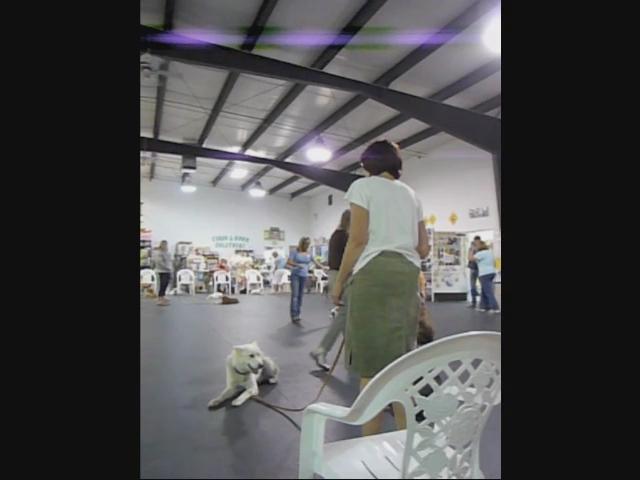 Dog Training Klamath Falls
