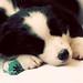 Sleepy Turbo