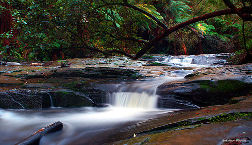 Otways Rainforest, Lorne, Australia