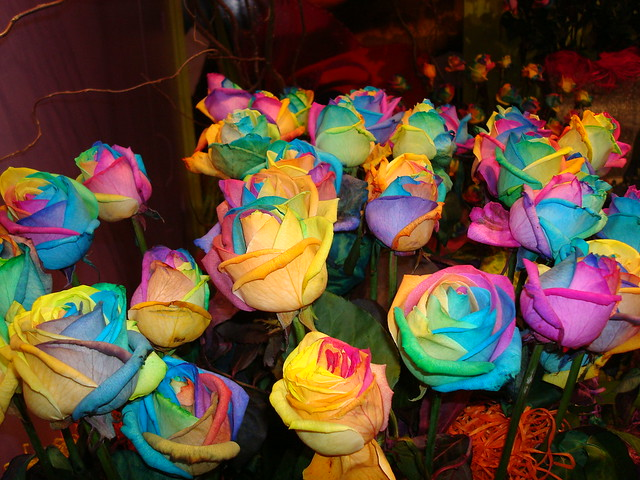 Multi colored roses flickr photo sharing for Dual color roses