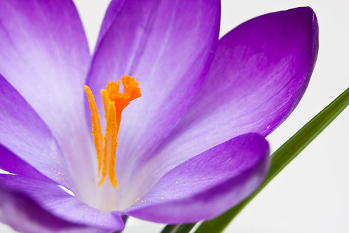 7 Unmissable Tips for Better Flower Photos