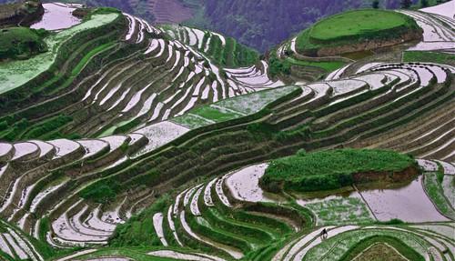 Long Jin Terraces