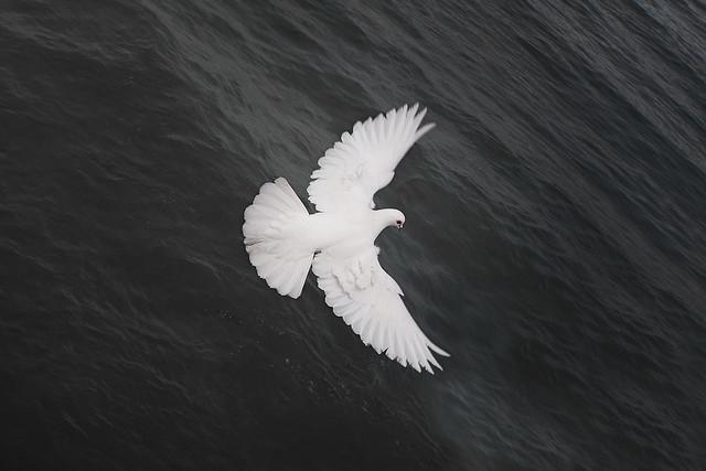 udaan symbol - photo #47