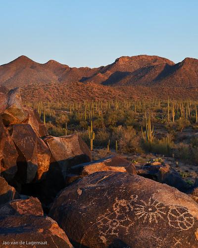 sunset cactus plants saguaro petroglyph saguaronationalpark