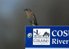 Rio Cosumnes Reserve