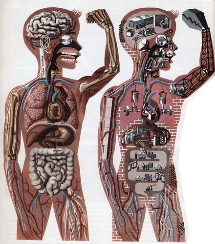 The body works like a machine