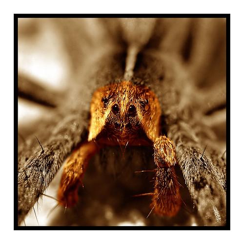 macro olympus speeder araignée supershot raynoxdcr250 50f2 mywinners e520 christianchauvel