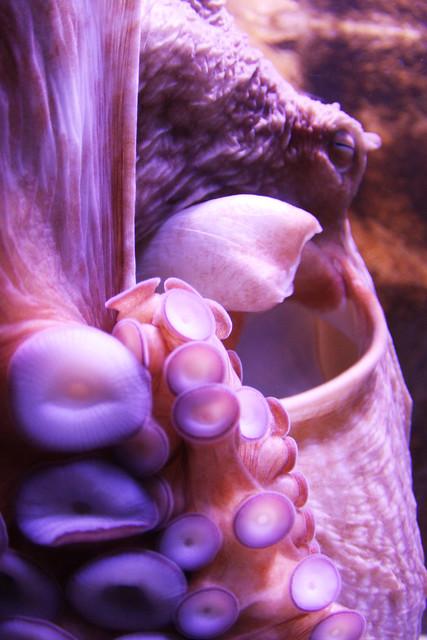 Header of kraken