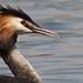 Aldenham Reservoir Birds April 09 34 by Rich Wigley