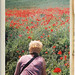 vintage poppies 2 by Duncan Knifton