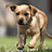the Amazing Dog Pictures group icon