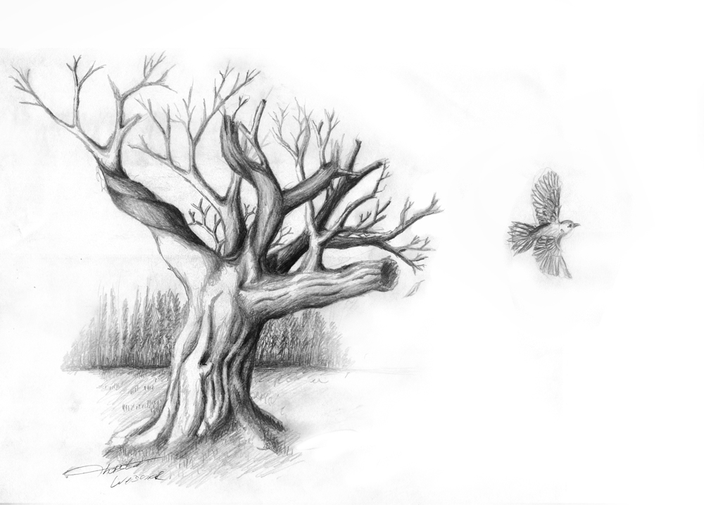 Pencil Drawing Tree With Bird - A Photo On Flickriver