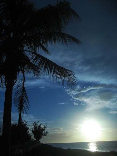 sunset silhouette palmtree bahamas eleuthera tarpumbay