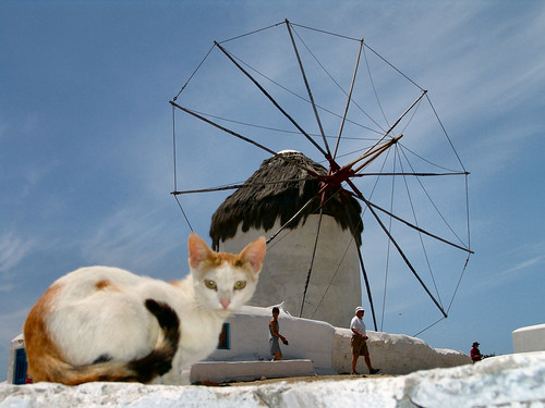 Windmill Cat