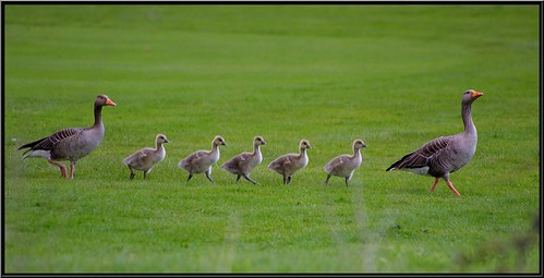 Family Outing for the GreyLag Family.