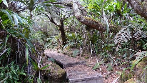 A visiter à Salazie, île de la Réunion - la forêt de Bélouve