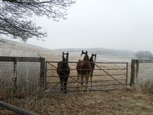 horses on the way to the pub