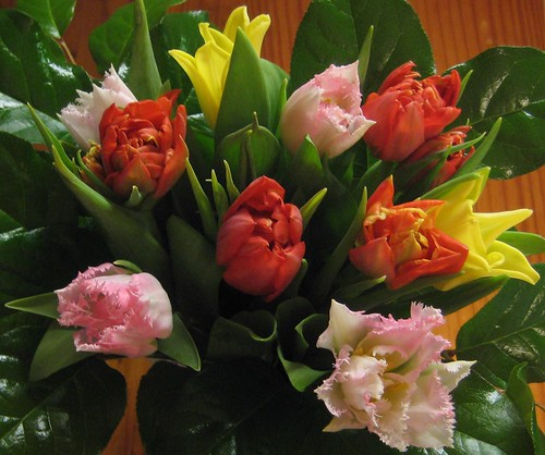 Tulips in February