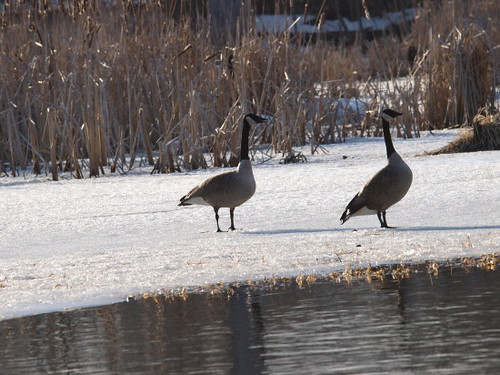 creek landscape exposure time swamp hudson marsh viviry