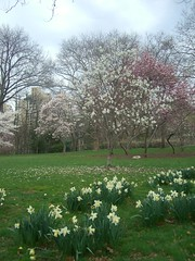 Spring. Central Park. New York City.
