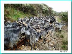 Linha do Tua - Cabras