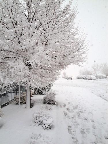 Colorado spring?