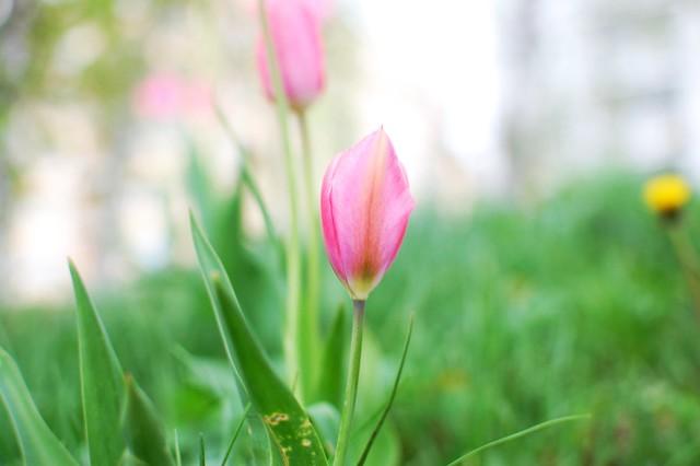 pink sat
