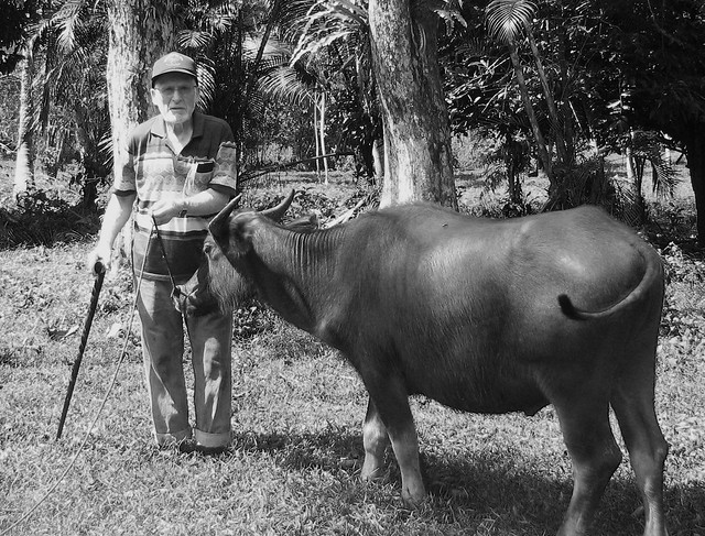 "3550953276_88754df554_z - Mo Tuo Ka Sa , ""Old Carabao Likes To Eat Young Grass"" ?  - Question and Answer"