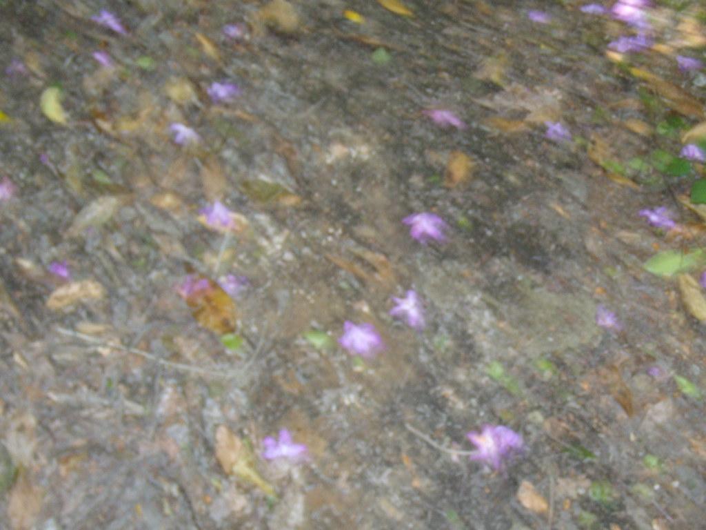 Rhodi petals Haslemere round