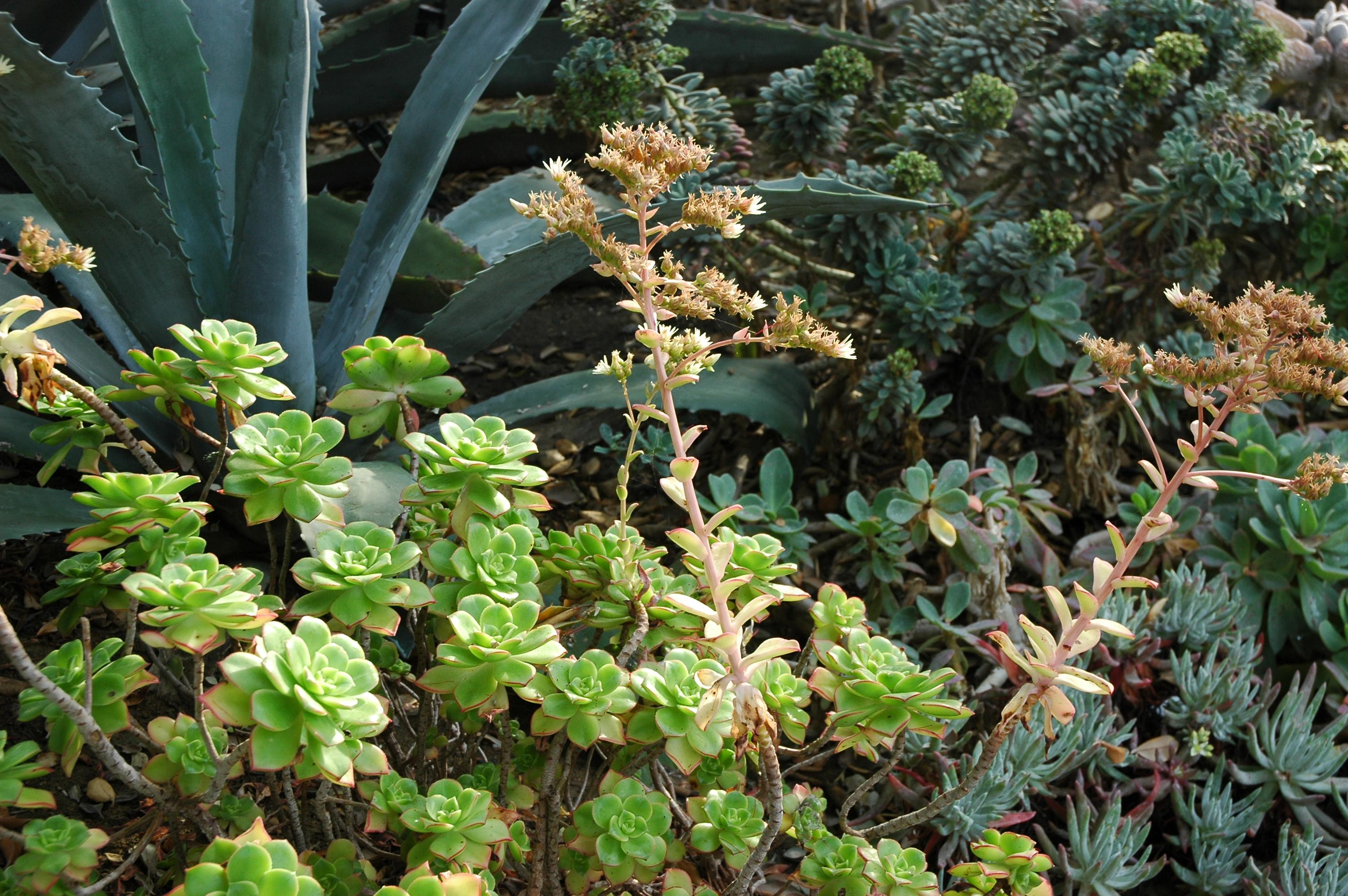 Meditation Garden Self Realization Fellowship Encinitas California Usa3435 Flickr Photo