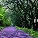Walk the Purple Path