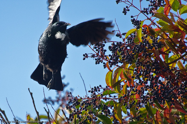 Tui Flight