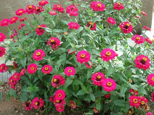 plantas jardim nordeste : Datoonz.com = Plantas Jardim Nordeste ~ V?rias id?ias de ...