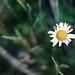 summer weed