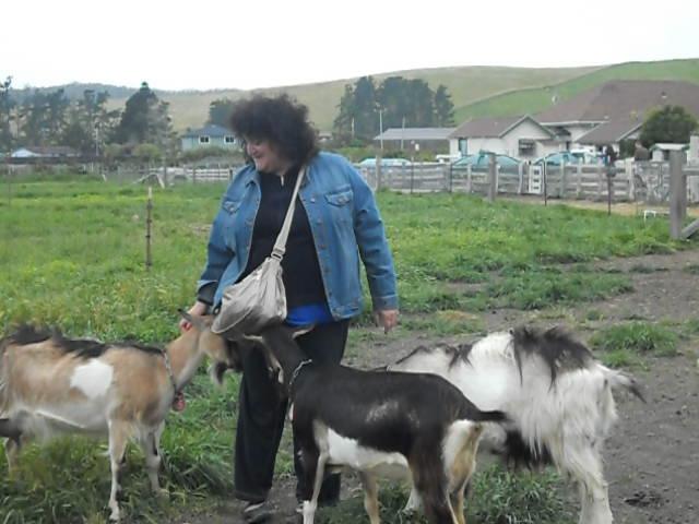 Goat Food In Good Games Big Farm