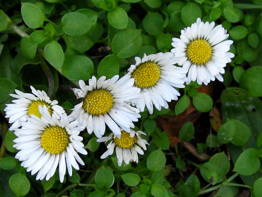 Flowers That Grow In Winter Grow In Winter Artificial