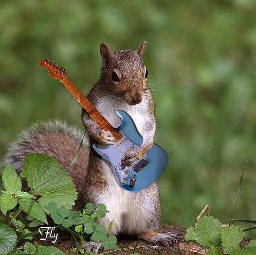 Squirrel Guitar | © All rights reserved. | By ...