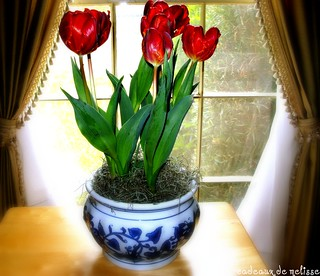 classically displayed tulips ...