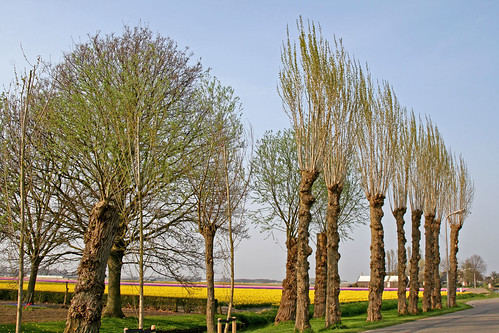 Trees in a row..........