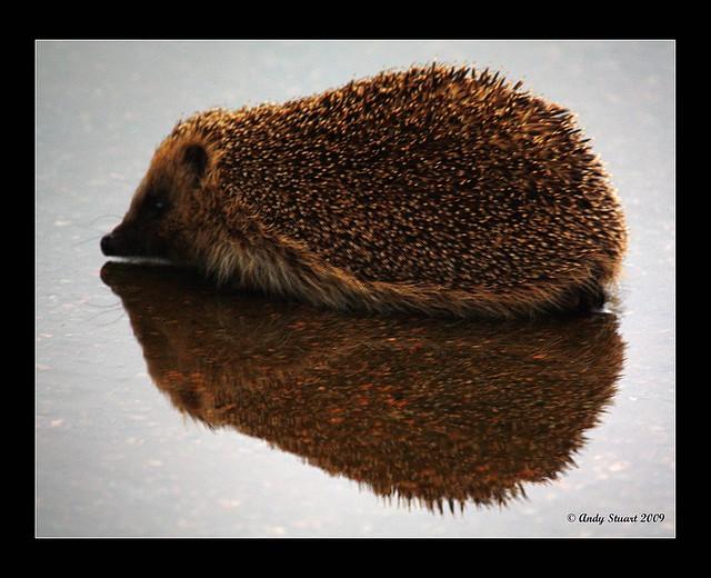 Hedgehog Island ?