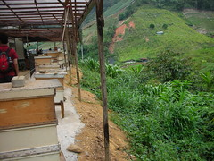 Cameron Highlands 05 - Bee farm