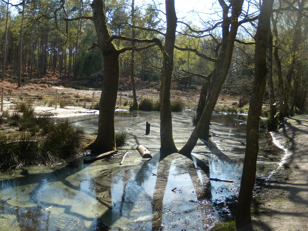 Murky pond Pulborough to Amberley