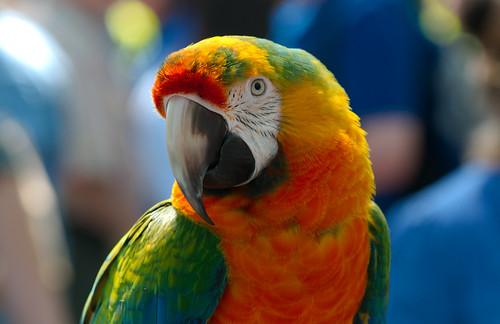 Parrot 1