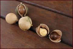 coconut(0.0), locket(0.0), walnut(0.0), nuts & seeds(1.0), wood(1.0), tree nuts(1.0), produce(1.0), food(1.0), still life(1.0), nut(1.0),
