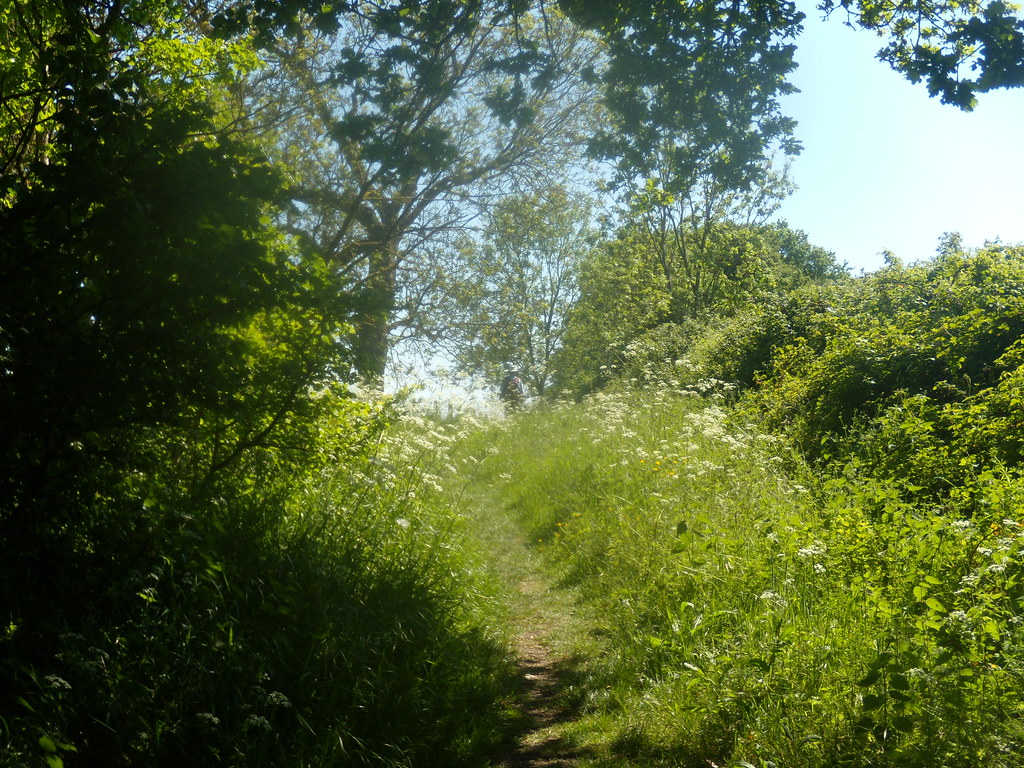 Green scene Pangbourne round walk