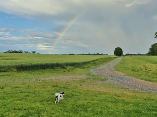 rainbow mahockney mahockneygardens