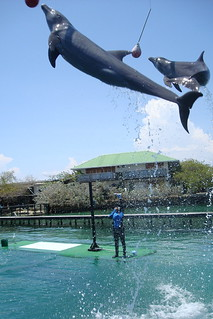Rosario Islands, Dolphin Show
