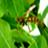 the insectos del jardin group icon