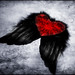 wish my heart has wings to fly by claudia hering (sundance)